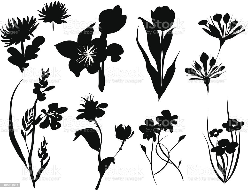 Line Drawing Flower Vector : Vector floral silhouette icons set stock art & more images of