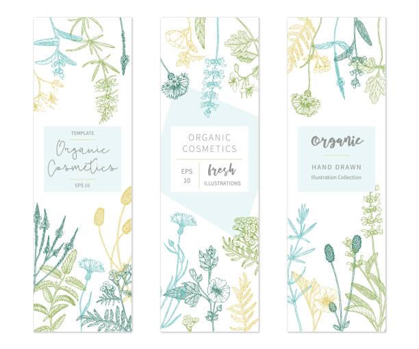 illustrazioni stock, clip art, cartoni animati e icone di tendenza di vector floral templates. - erboristeria