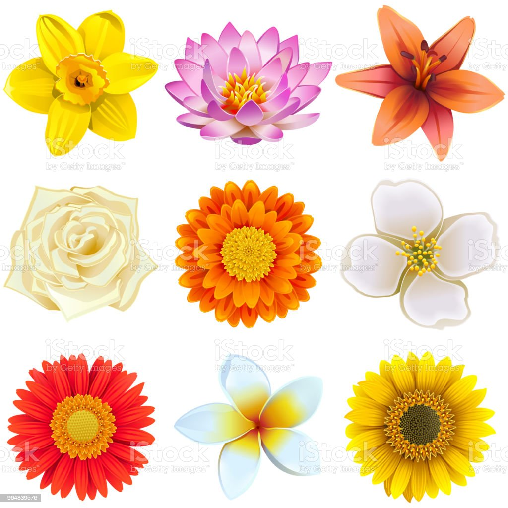 Vector Flower Icons Set 2 royalty-free vector flower icons set 2 stock illustration - download image now