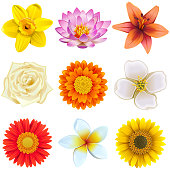 Vector Flower Icons Set 2 isolated on white background