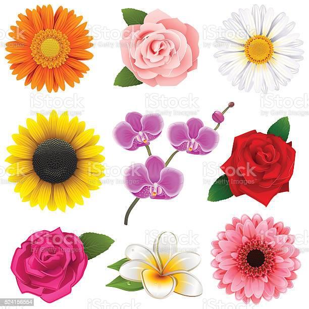 Vector flower icons vector id524156554?b=1&k=6&m=524156554&s=612x612&h=aeoikrha4yxo3pksqczdiomzxbcbpdl93qoozguicda=