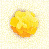 Yellow burgeon blossom of carnation on leaves texture. Vector design element
