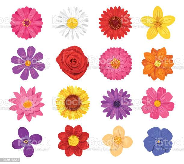 Vector flower set isolated on white background vector id948816634?b=1&k=6&m=948816634&s=612x612&h=1e0iv5lwmjlofauosfvpczgermjmo0nrqfgri0xi8zy=