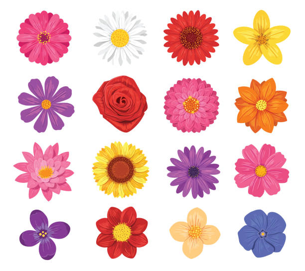 Vector flower set isolated on white background Set of various flowers daisy stock illustrations