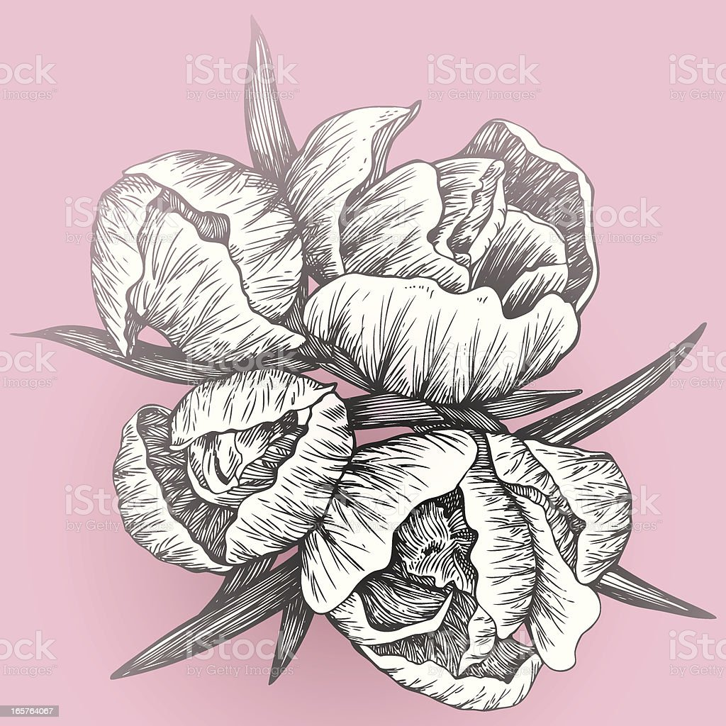 Vector flowers royalty-free stock vector art