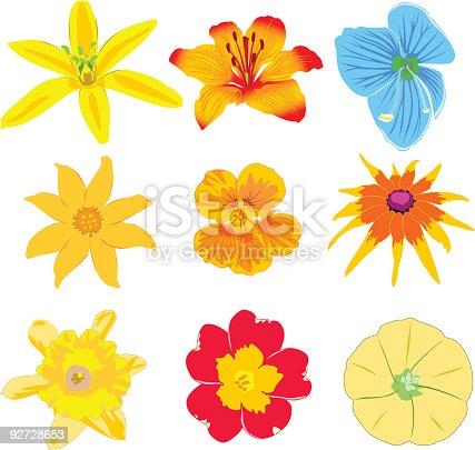 Vector of real flowers: Asperula odorata, Veronica chamaedrys, Tropaeolum majus, Petunia. File contains formats: .ai, .eps, .svg