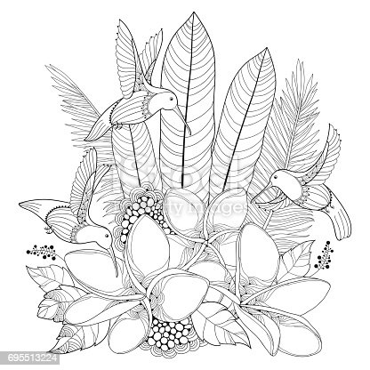 Vector Flying Hummingbird Plumeria Flower And Palm Leaf In