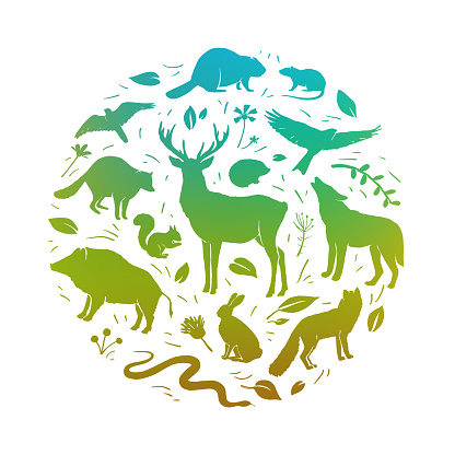 Vector forest animals collection in circle frame. Flat animals silhouettes in green colors. Design for t-shirt print, cover, poster, banner, card
