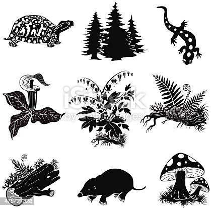 A vector illustration of forest animals and plants in black and white. This illustration set includes images of a box turtle, pine trees, a salamander, jack in the pulpit flower, bleeding heart plant, ferns and logs, a mole and mushrooms. These plants and animals can be found in north America.