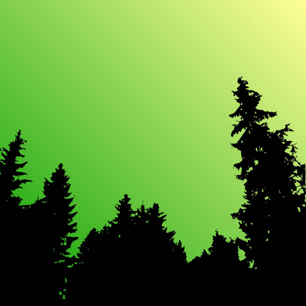 Vector forest landscape silhouette. Realistic trees, woods silhouettes in night and evening sky. Outdoor nature scene with pine and spruces Vector landscape silhouette. Realistic trees, woods and mountains silhouettes on night and evening sky. treelined stock illustrations