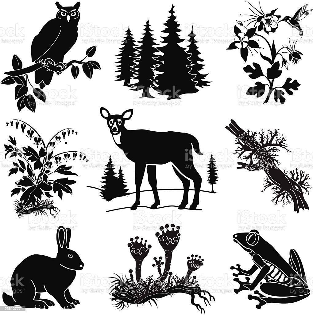 vector forest wildlife set in black and white vector art illustration