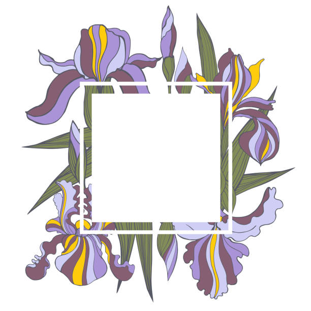 stockillustraties, clipart, cartoons en iconen met vectorframe met irisbloemen. - iris plant