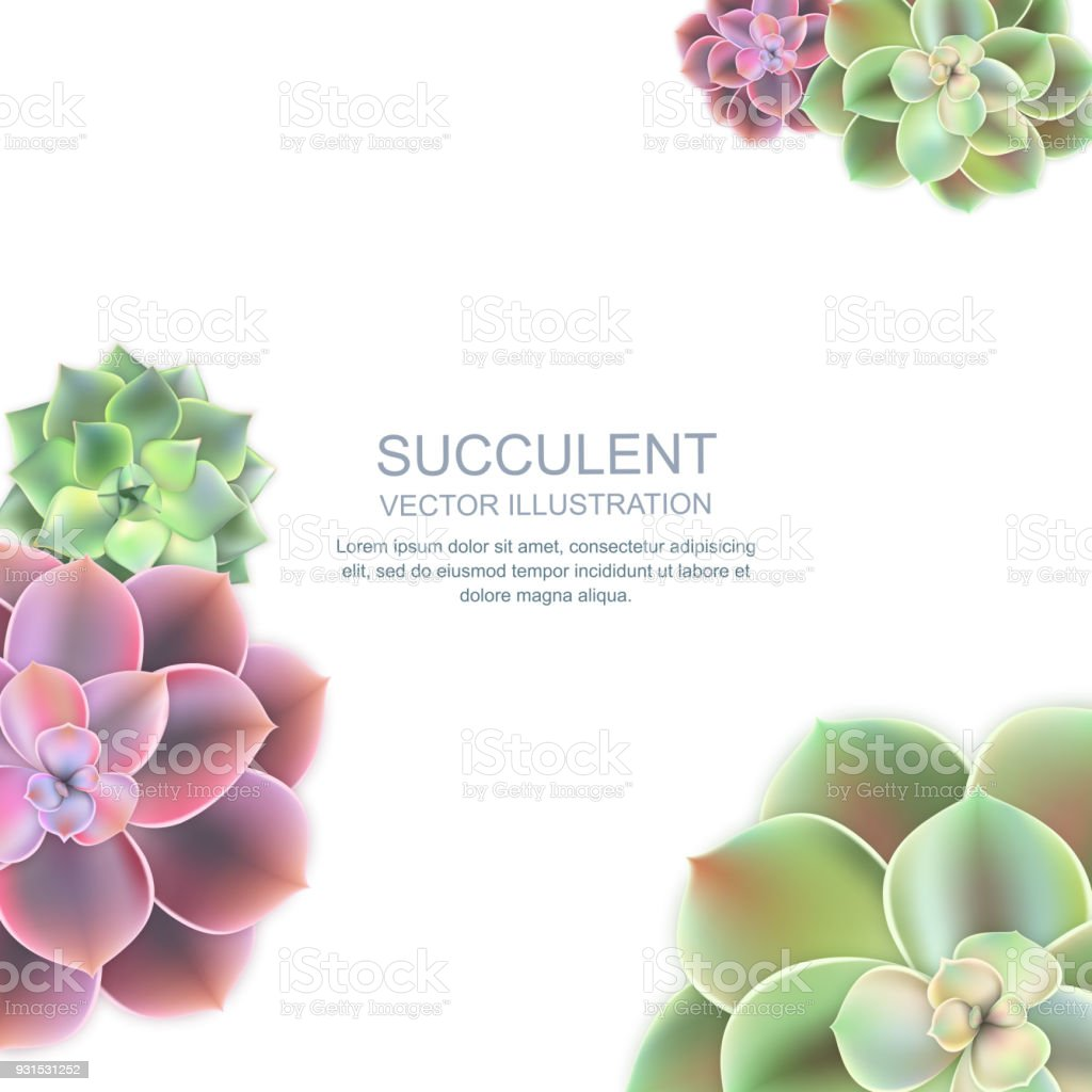 Vector Frame With Realistic Of Pink Purple And Green Succulent