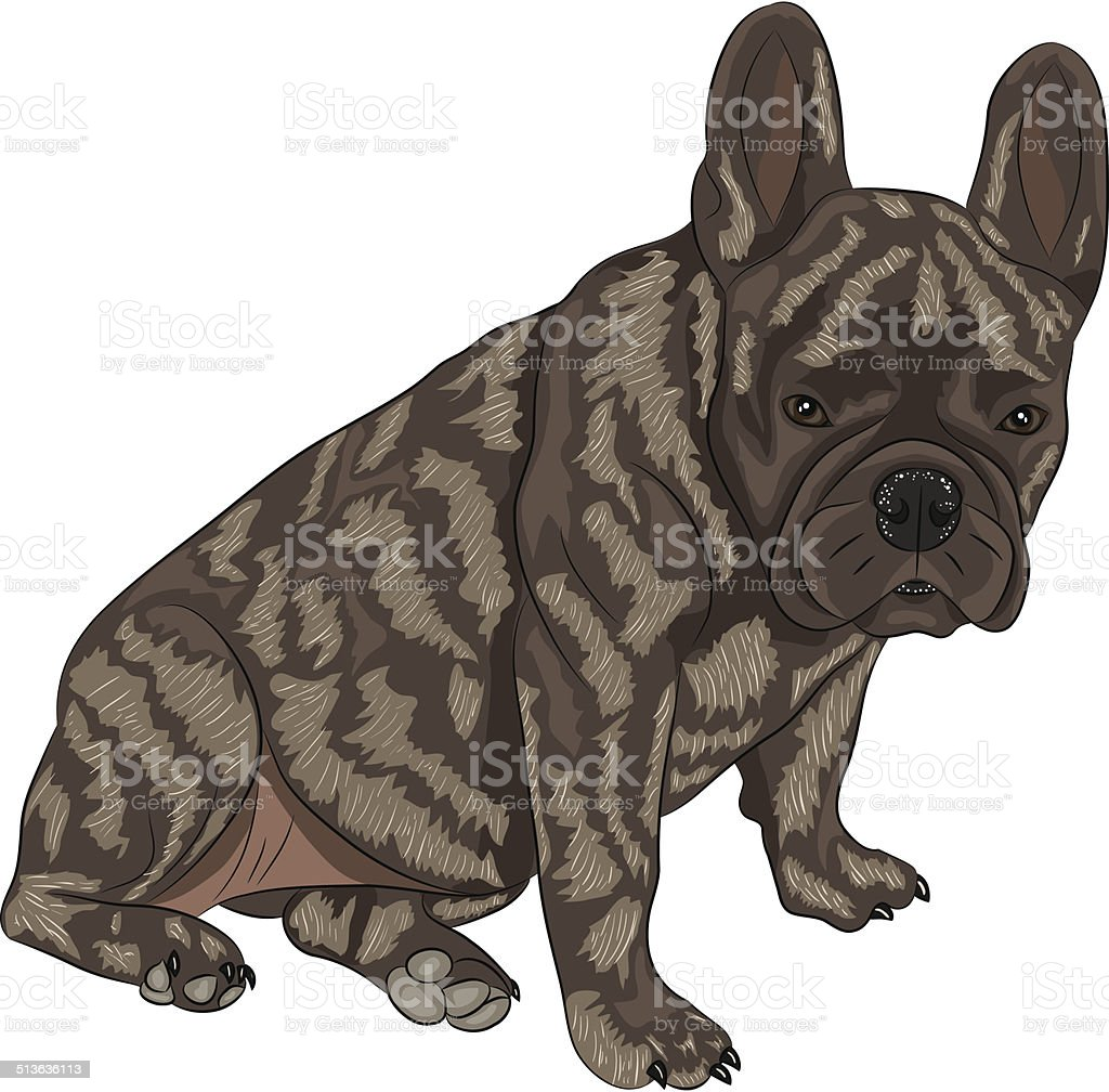 Vector French Bulldog Stock Illustration Download Image Now Istock