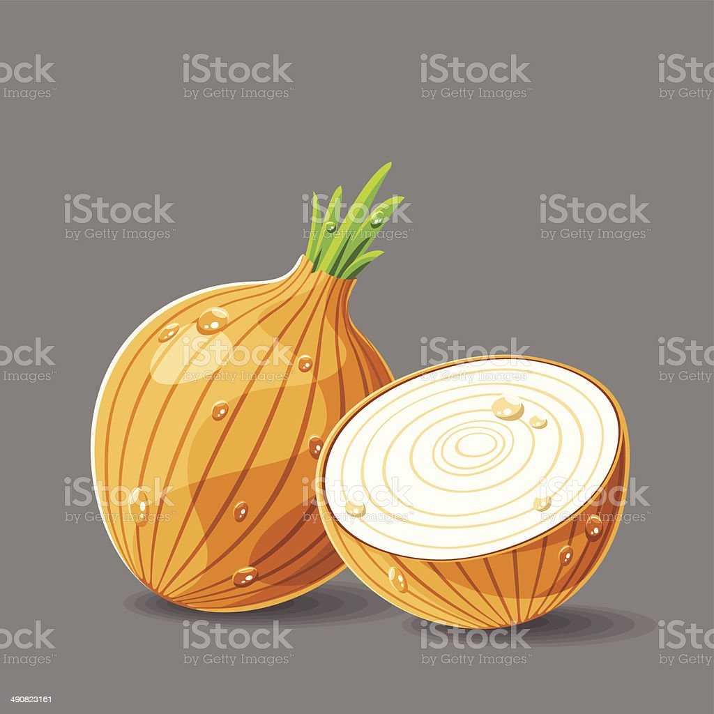 Vector fresh brown onions with water drops. Vector illustration. royalty-free stock vector art