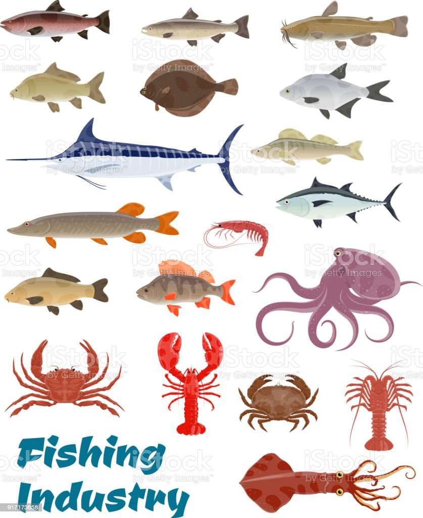 Vector fresh fish catch icons for fishery industry vector art illustration