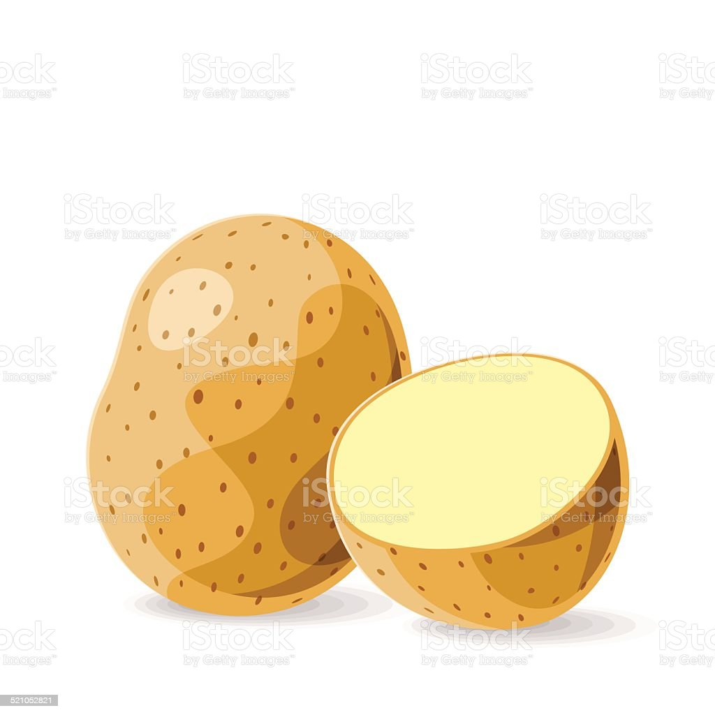 Vector fresh potatoes on white. Vector illustration. vector art illustration