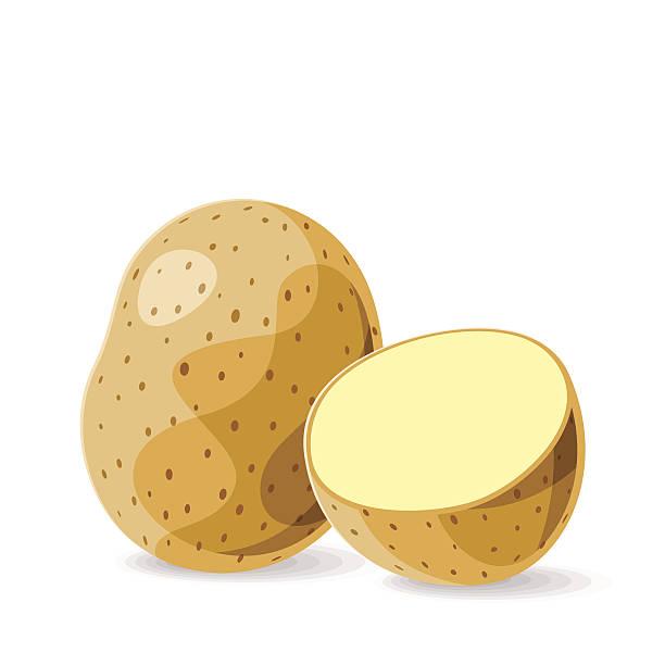 vektor-frische kartoffeln auf weiß.  vektor-illustration. - kartoffeln stock-grafiken, -clipart, -cartoons und -symbole