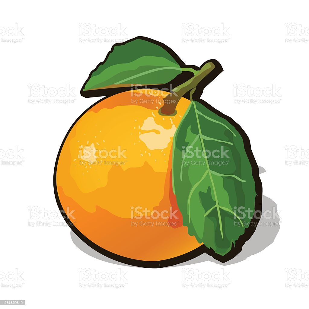 Vector fresh ripe orange with leaves vector art illustration