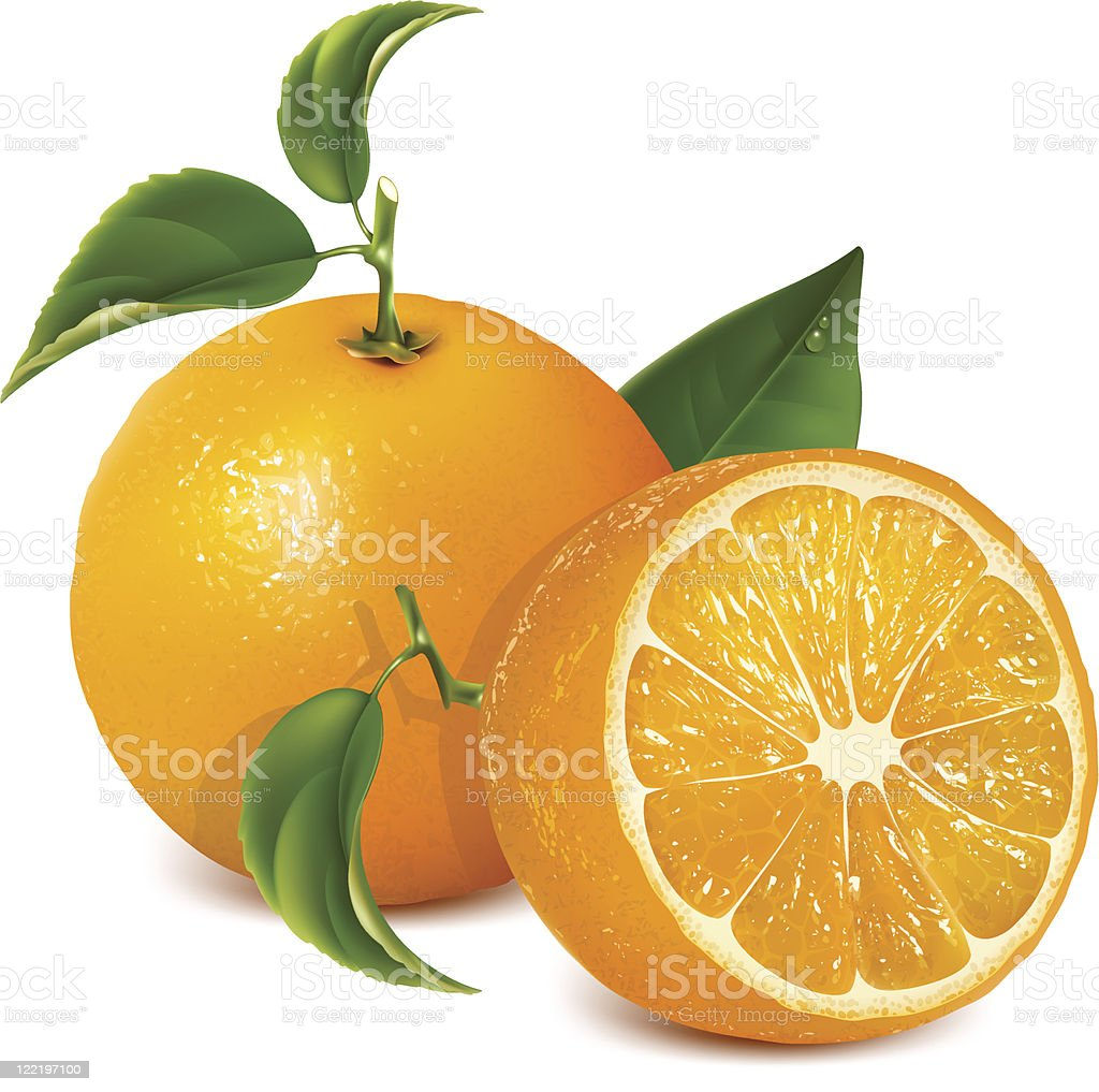 Vector fresh ripe oranges with leaves. royalty-free stock vector art