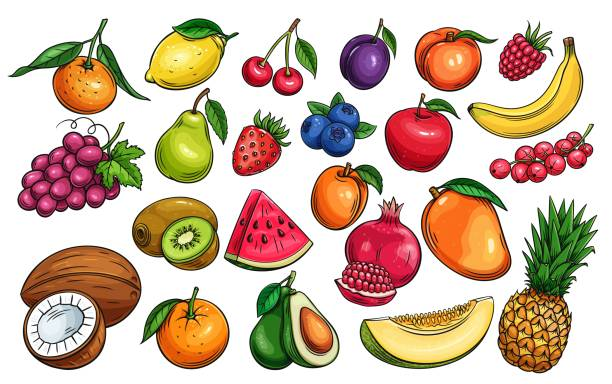 vector fruit and berries Hand drawn vector fruit and berries icons set. Illustration of color fruits for design farm product, market label vegetarian shop. avocado drawings stock illustrations