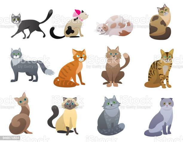 Vector funny and cute cartoon cat different breeds pet characters set vector id946574834?b=1&k=6&m=946574834&s=612x612&h=s2r ggs4kcf6k0a1ln2 o14vm9mwbdlkmunhq1q66yk=