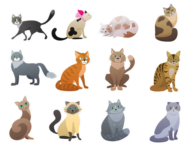 vector funny and cute cartoon cat different breeds pet characters set. - cat stock illustrations, clip art, cartoons, & icons