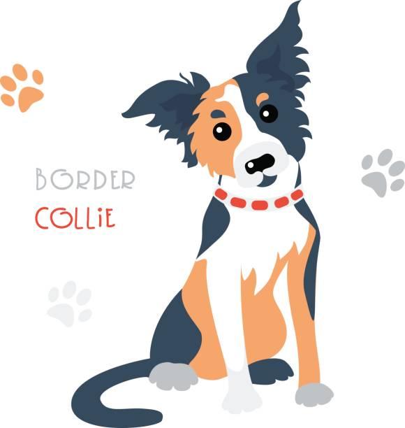 vector funny border collie tricoloured dog sitting - collie stock-grafiken, -clipart, -cartoons und -symbole