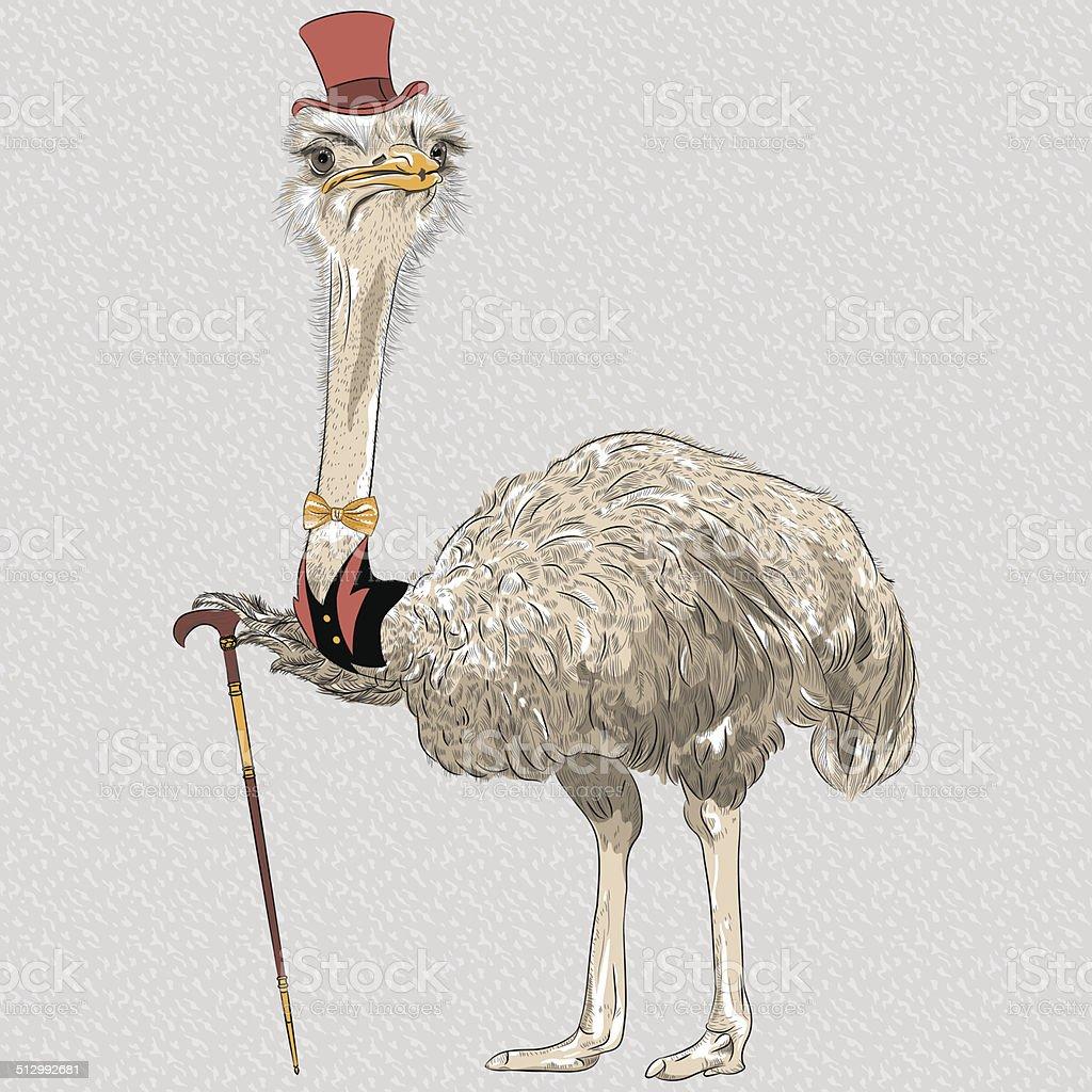 Vetor de aves de hipster engraçado avestruz - ilustração de arte em vetor