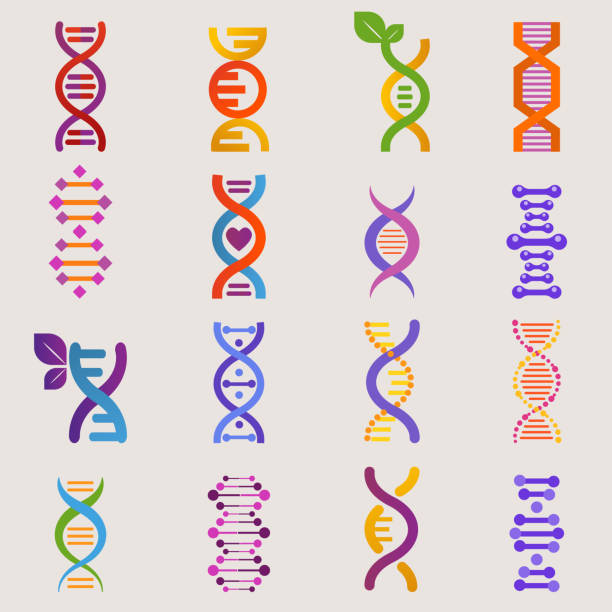 DNA vector genetic sign with genome or gene in biology medical research and DNAse or DNAbinding structure illustration set isolated on white background DNA vector genetic sign with genome or gene in biology medical research and DNAse or DNAbinding structure illustration set isolated on white background. genetic research stock illustrations
