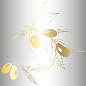 Vector Golden olive branch with golden leaves. Plant botanical garden floral foliage. Golden engraved ink art. Isolated olive illustration element on silver background