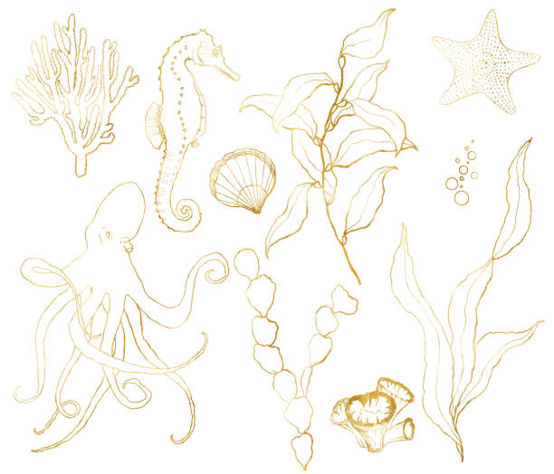 Vector golden sketch set with underwater life. Hand painted seahorse, laminaria, starfish and shell isolated on white background. Aquatic line art illustration for design, print or background. Vector golden sketch set with underwater life. Hand painted seahorse, laminaria, starfish and shell isolated on white background. Aquatic line art illustration for design, print or background sea horse stock illustrations