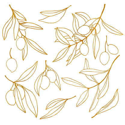 Vector golden sketch with olive, leaves and branch. Hand painted floral line art set. Illustration isolated on white background for design, print, fabric or background.