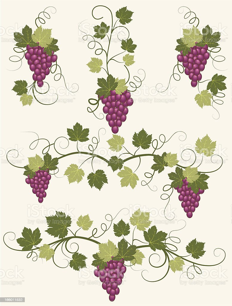 Vector grapes . royalty-free stock vector art