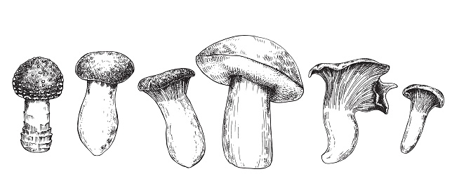 vector graphic illustration. set with mushrooms. black ink drawing of mushrooms isolated on white background.