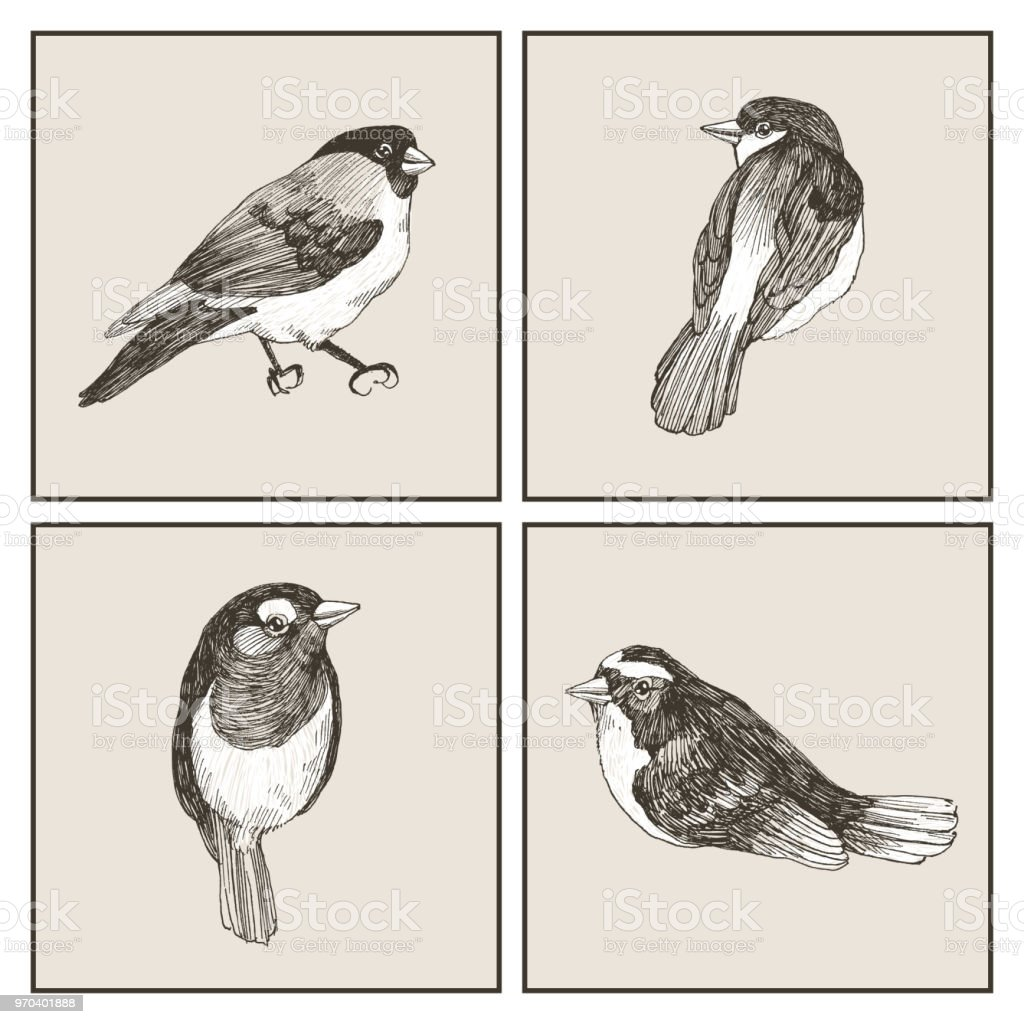 Vector Graphic Set Of Hand Drawn Birds On Grey Background Ink Drawing Style