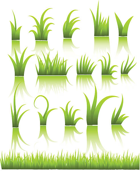 stockillustraties, clipart, cartoons en iconen met vector grass - grasspriet