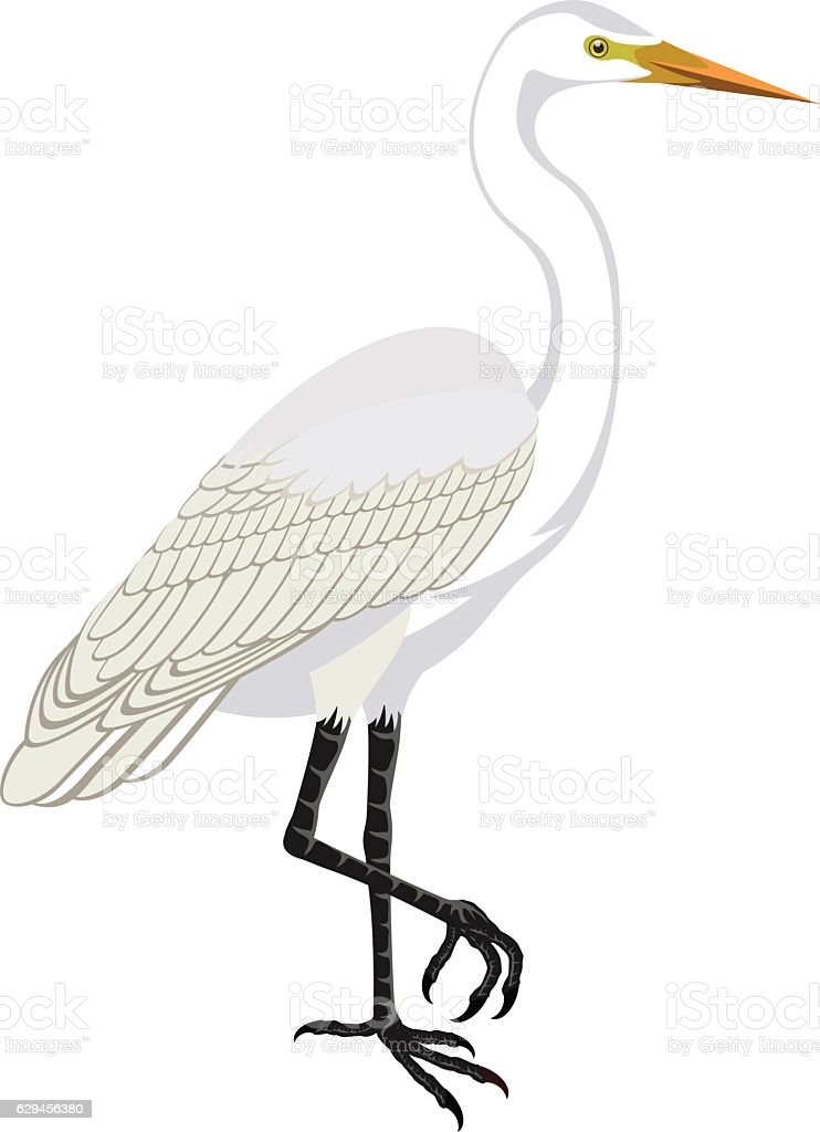vector Great white heron vector art illustration