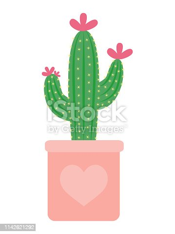 Vector green cacti with flowers in flowerpot. Isolated on white background. Cartoon flat style