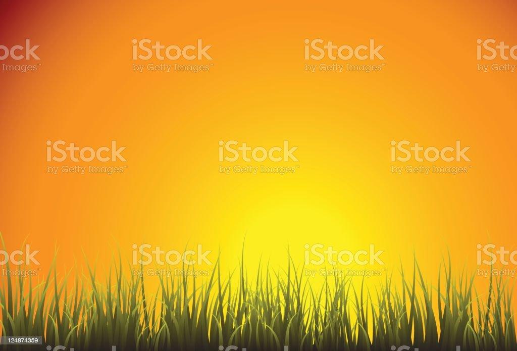 Vector Green Grass Field Horizon Dawn vector art illustration
