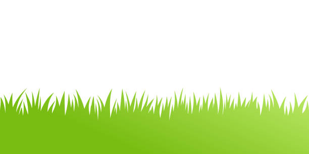 ilustrações de stock, clip art, desenhos animados e ícones de vector green grass: natural, organic, bio, eco label and shape on white background - erva