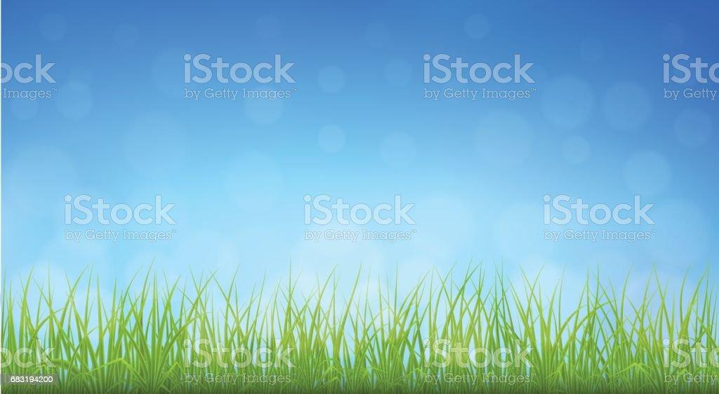向量綠草 免版稅 向量綠草 向量插圖及更多 具有特定質地 圖片