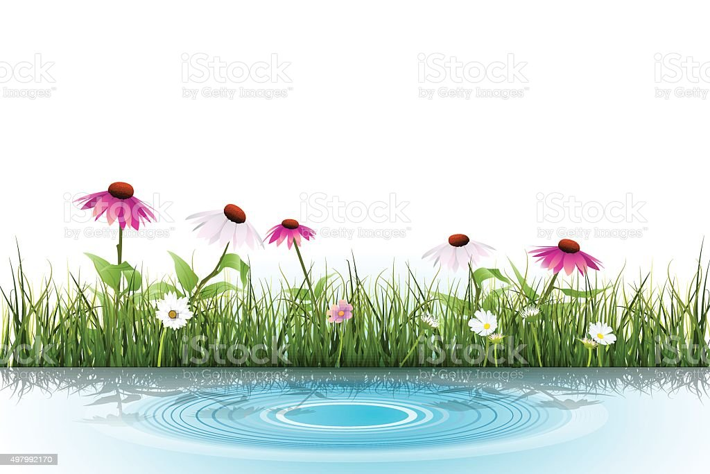 Vector Green grass, white daisy flower with reflection in water vector art illustration