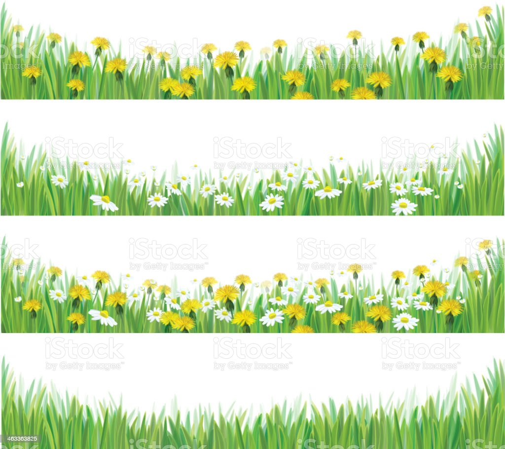 Vector green grass with chamomile and dandelions. vector art illustration