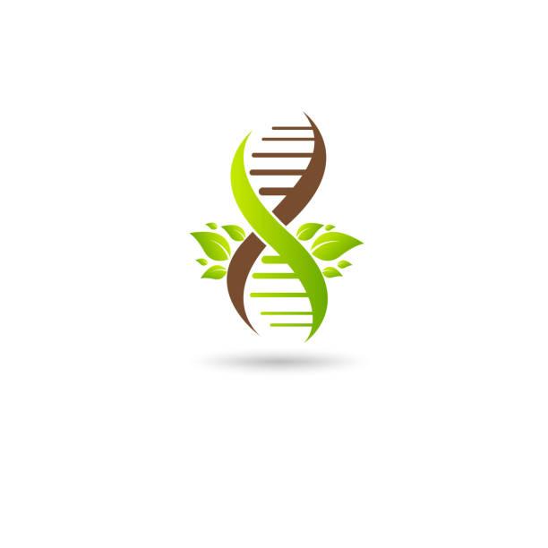 06-DNA vector green leaf vector art illustration