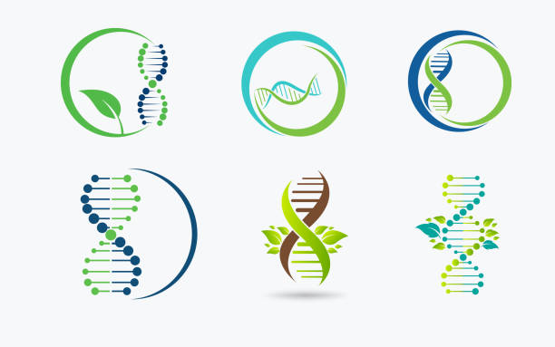 08-DNA vector green leaf vector art illustration
