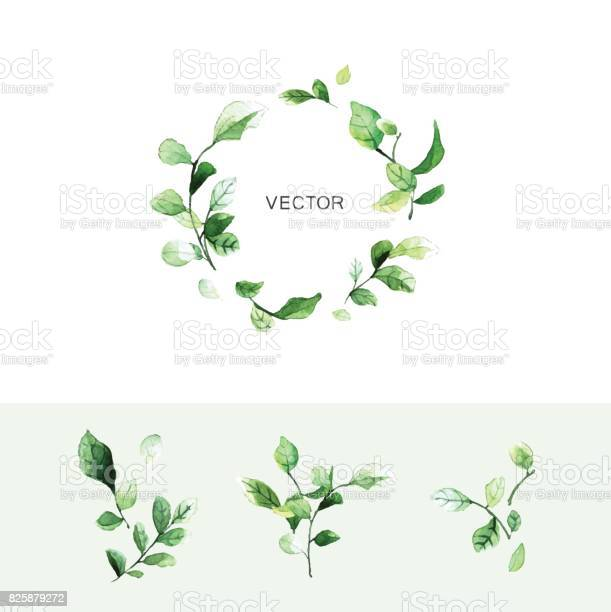Vector green leaf wreath with place for text and set of branches with vector id825879272?b=1&k=6&m=825879272&s=612x612&h=buk1bpxnhdkjoponzyvy sscstqqv2 5wpgw8cypacw=