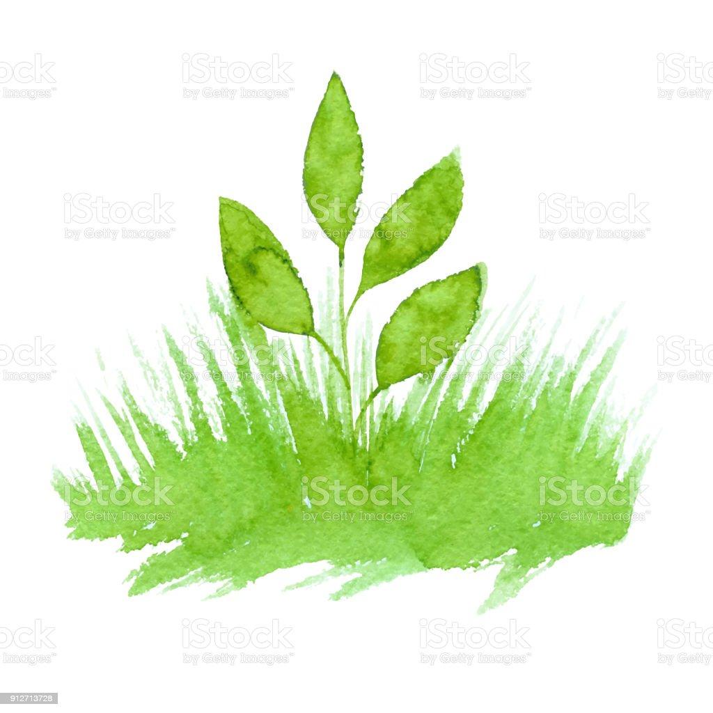 Aquarelle de vecteur vert naturel, bio, bio, éco label et forme herbe sur fond blanc. Tache de dessinés à la main. - Illustration vectorielle