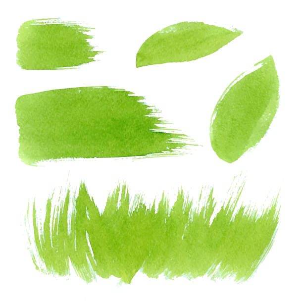 Vector green watercolor natural, organic, bio, eco labels and shapes, strokes, grass, leaves on white background. Hand drawn stains set. Vector green watercolor natural, organic, bio, eco labels and shapes, strokes, grass on white background. Hand drawn stains set. fruit backgrounds stock illustrations