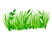Vector green watercolor natural, organic, grass on white background. Hand drawn eco label, shape stain